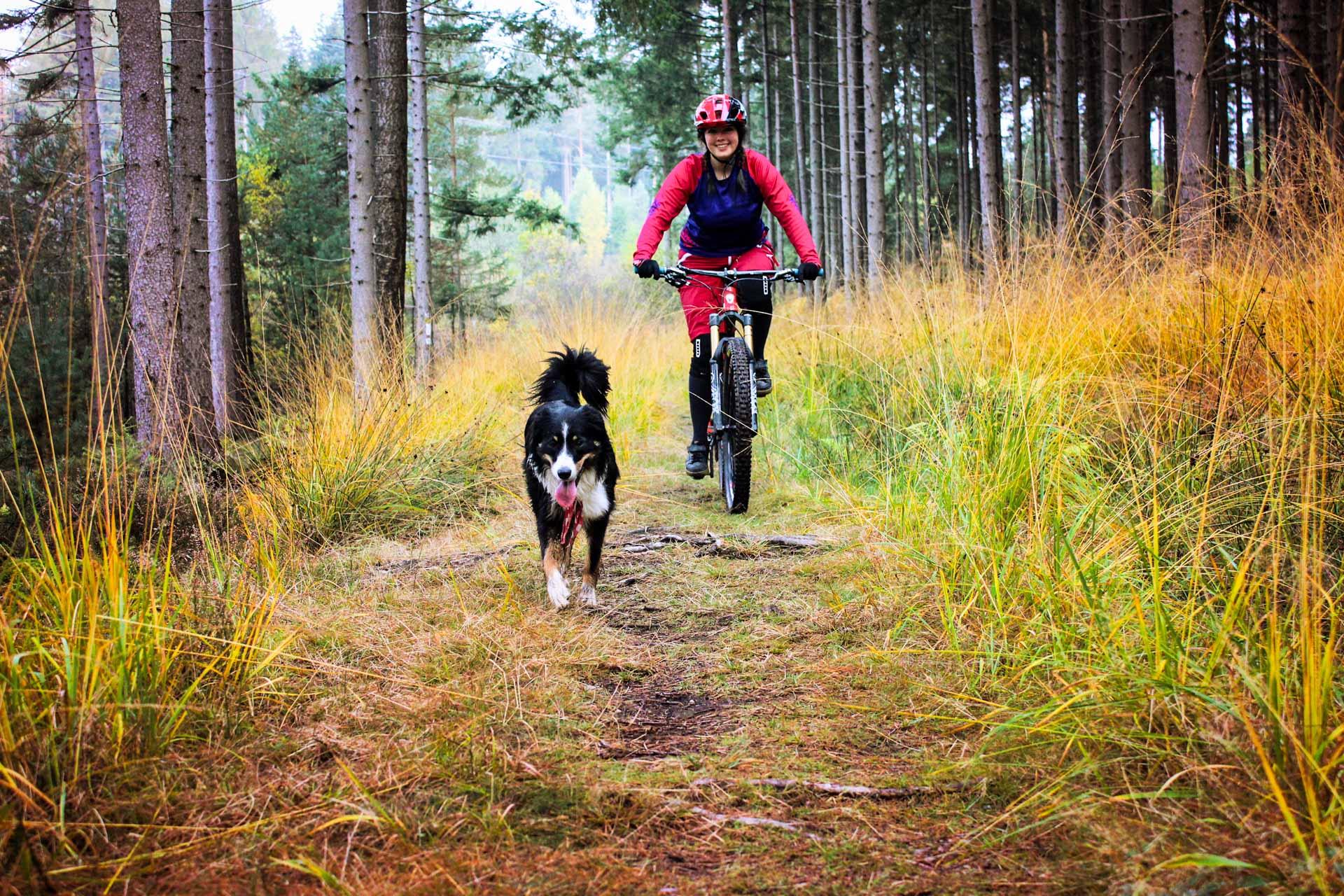 Nichts ist schöner als die Freude an einer gelungenen Ausfahrt mit seinem Hund zu teilen. Doch es gibt zum Thema Traildogs eine Menge zu beachten. Aber keine Angst, wir klären dich auf!