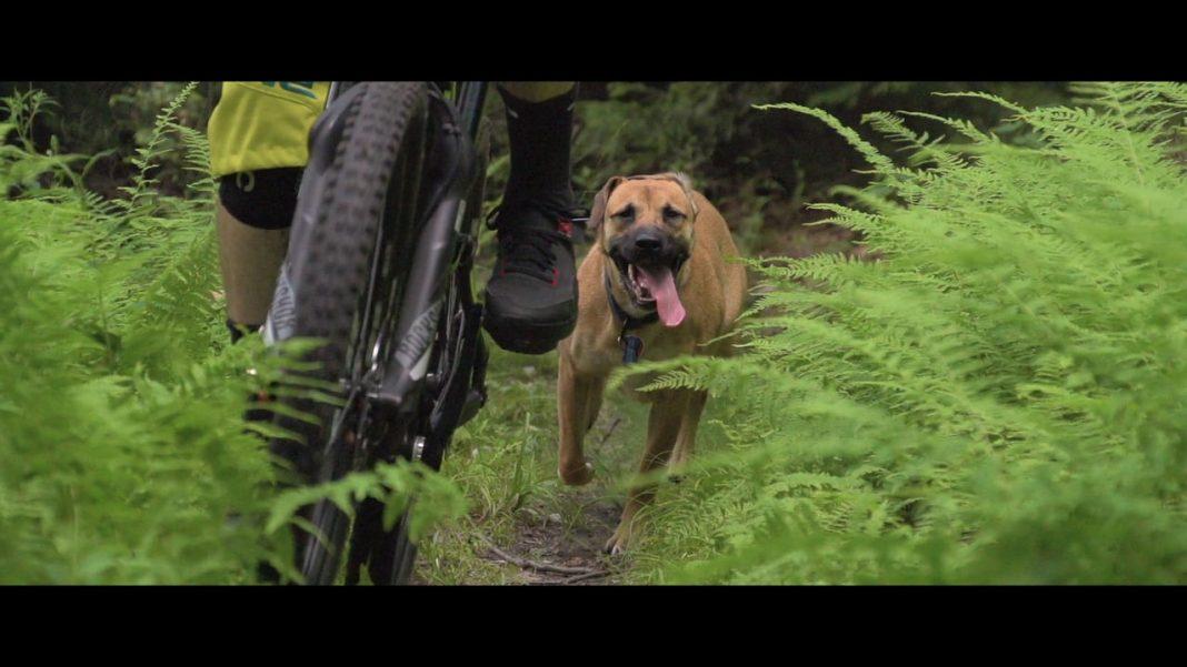 best_traildog_videos