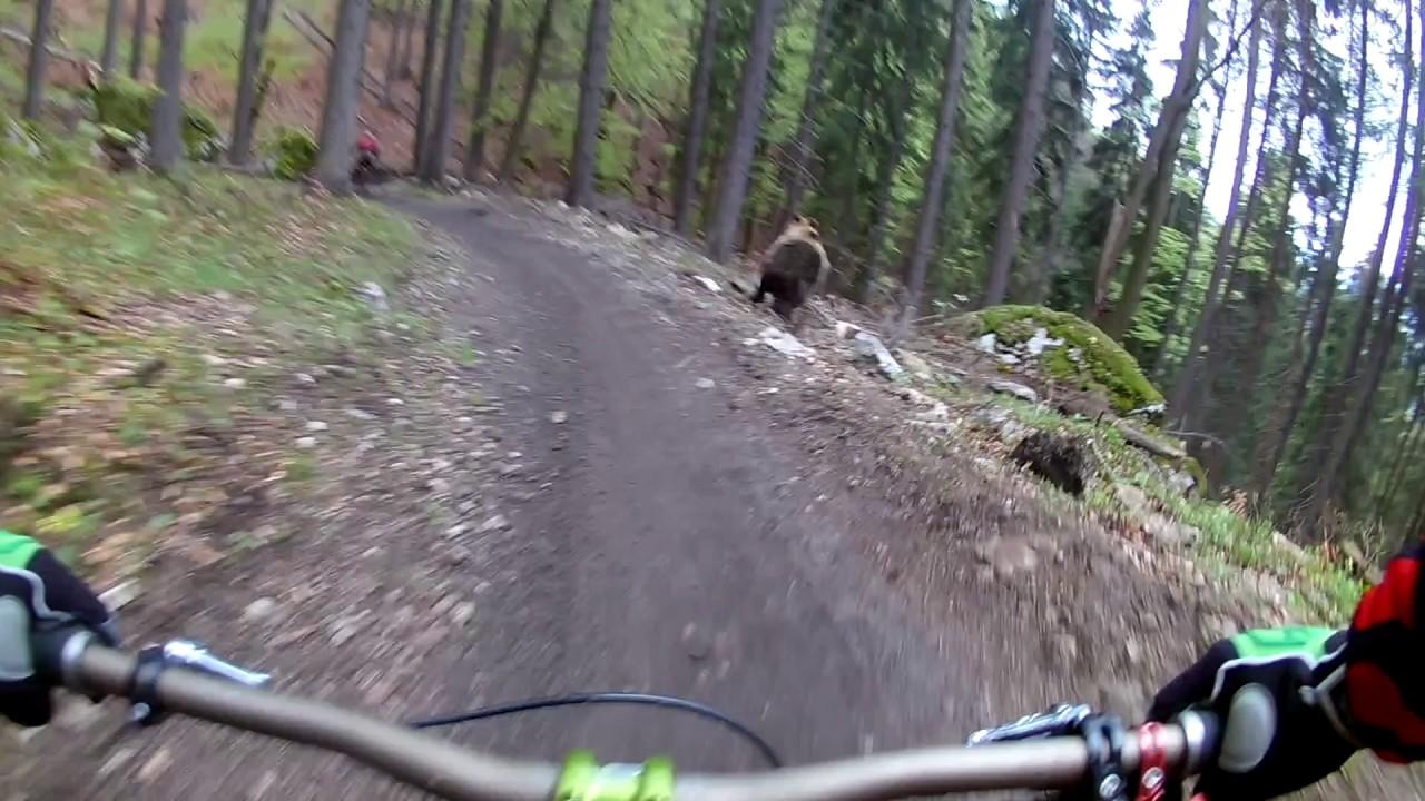 Bär jad Mountainbiker